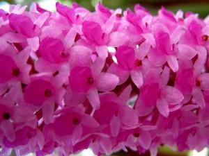 Lankester Orchids