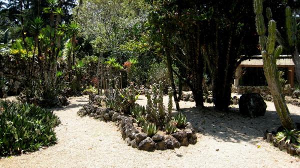Cactus Garden - Lankester Botanical gardens, Paraiso
