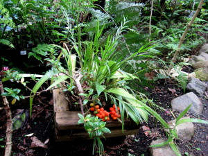 ProNativas is a project encouraging the propagation and use of native plants in Monteverde landscaping based a the entrance to the Bosque Eternal de Niños, Children's Eternal Rainforest