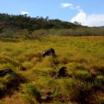 Rincón de la Vieja National Park