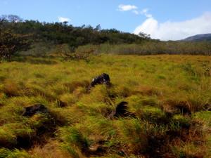 Grasslands at Rincon de la Vieja