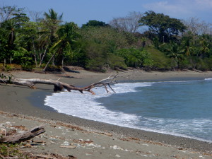 Playa Tamales is on the horn of the Osa Peninsula between Jiménez and Cabo Matapalo south of Punta Tigra facing Potrero across the Gulfo Dulce