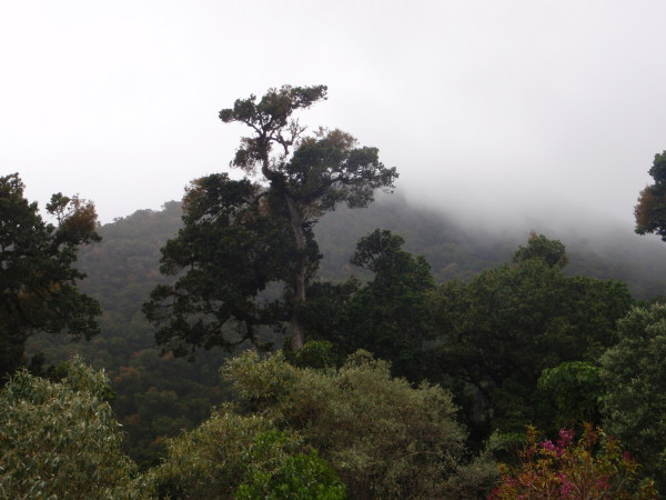cool and misty on the slopes of Chirripo