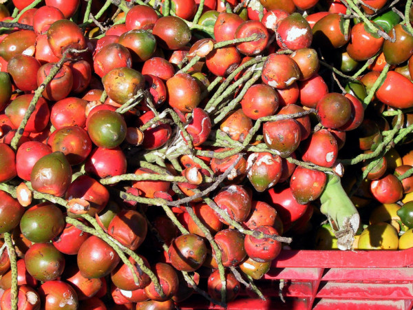 Pejibaye fruit