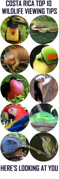 Costa Rica Wildlife Viewing Tips