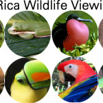 Best Places to See Wildlife in Costa Rica