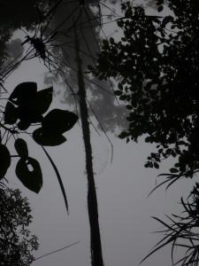 tree tops La Amistad