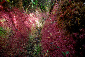 flowering moss La Amistad International Peace park