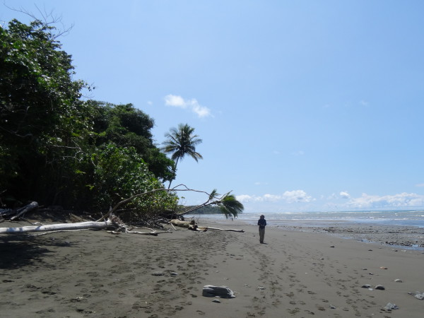 Playa Sirena, Corcovado National Park, Osa Peninsula