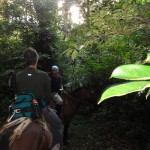 Horseback riding on rainforest trails requires concentration and a lot more skill than riding across open pasture - ducking and dodging branches without falling off