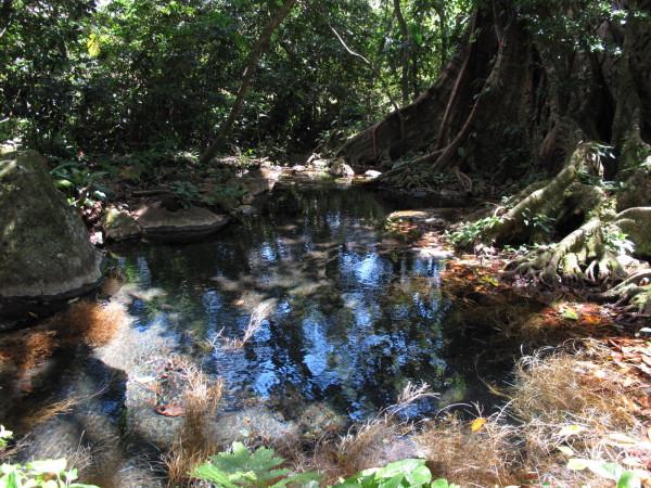 Natural hot springs pool between Lake Arenal and Bijagua