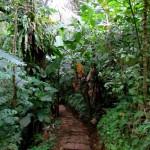 A trail at Tenorio Lodge