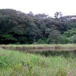 The little lagoon at Tenorio Lodge