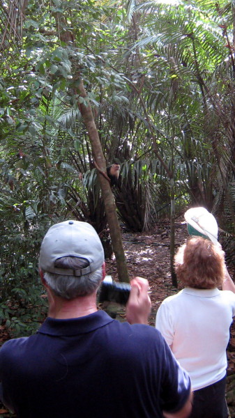 My parents spot a white faced capuchin along one of the trails in Hacienda Barú wildlife refuge