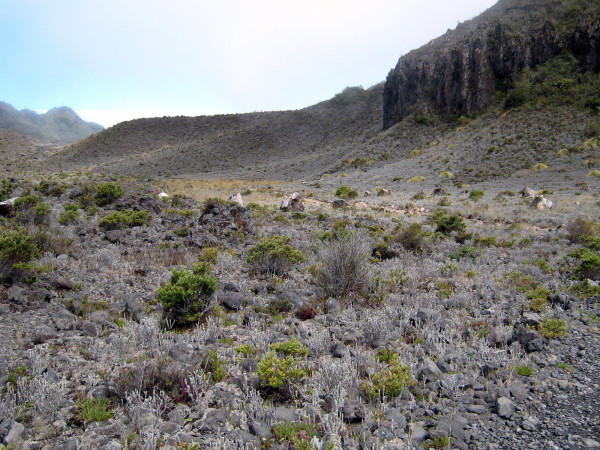 Returning on the south loop of the main crater trail, Volcán Turrialba National Park