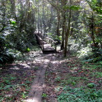 There are a few bridges over the muck and little creeks at the start of the trail on the north end but within about a km hikers are on their own at crossings - Gandoca Manzanillo Wildlife Refuge