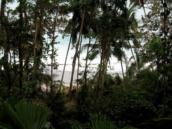 Beach through the trees