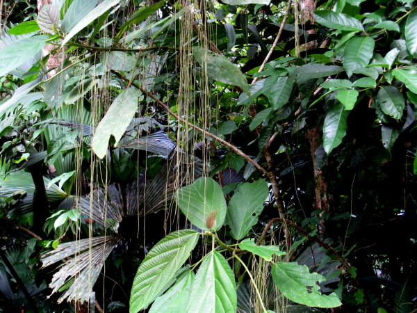 Green- Gandoca Manzanillo Wildlife Refuge