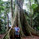 Big fig tree- Gandoca Manzanillo Wildlife Refuge