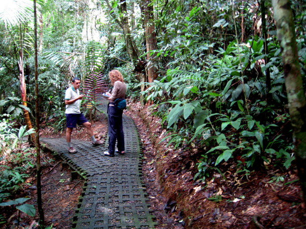 Many trails in Costa Rica are paved or graveled like these between the hanging bridges at Tirimbina rainforest