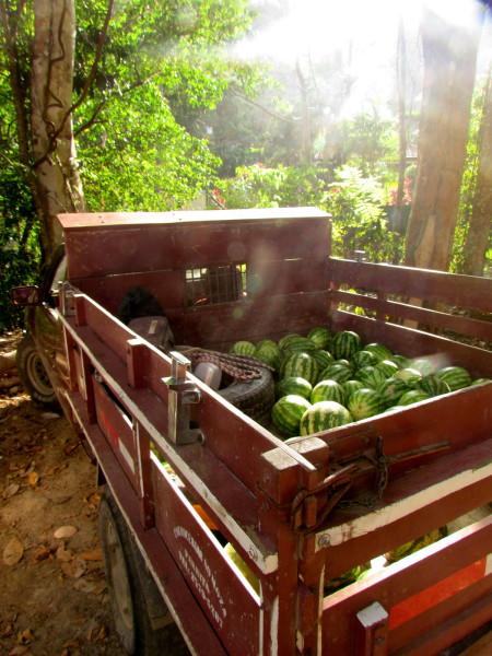 Truck full of watermelons near Turrialba