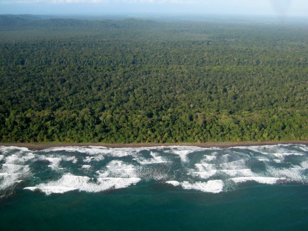 middle of Playa Tortuguero