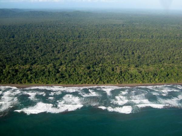 middle of Playa Tortuguero