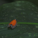 Moth Monteverde