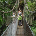 The second bridge at Heliconias is really two bridges with a platform wrapped around the trunk of a huge tree in middle of the span