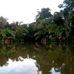 Jolio Swamp