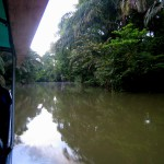Half the fun of Tortuguero is getting there and gettig away. We recommend going one way by small plane for the spectacular aerial views and the other way by small boat/collectivo water taxi to experience the canals.