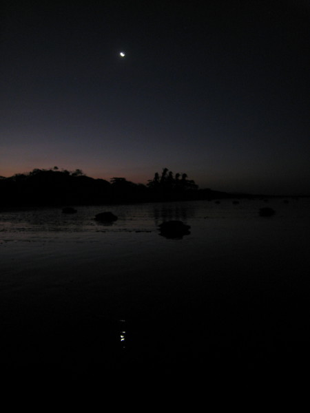 According to data collected by researchers the most likely nights to observe an arribada are on the last quarter moon (seen here reflected in the water) or the few nights following.