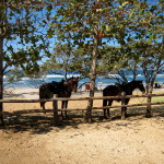 Horses waiting while their riders have a beer. Playa Negra (south of Tamarindo)