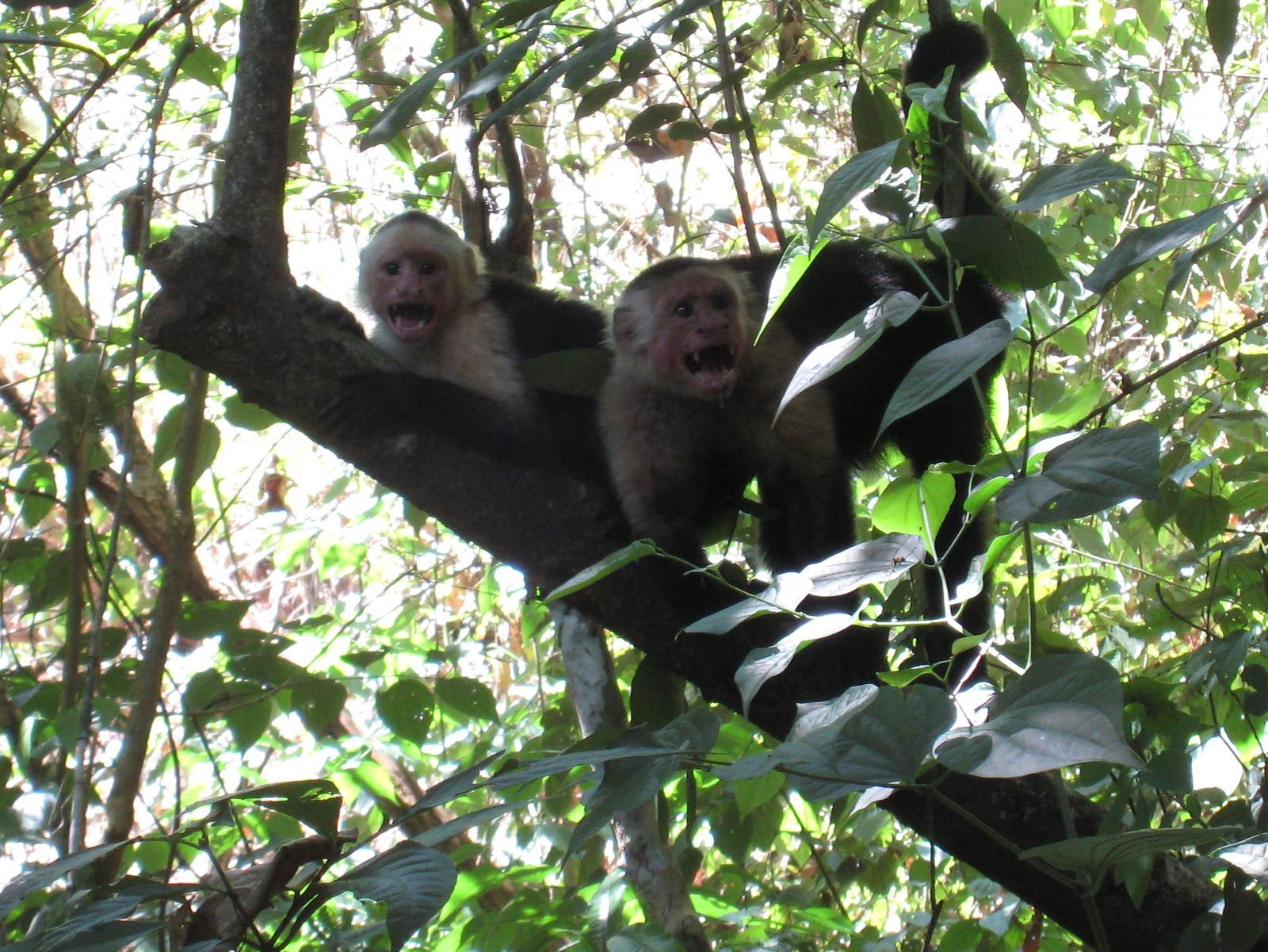 Photos Of Mammals In Costa Rica