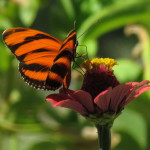 Butterfly & Moth Photos