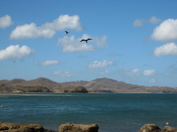 Frigate birds over Bahía de Salinas