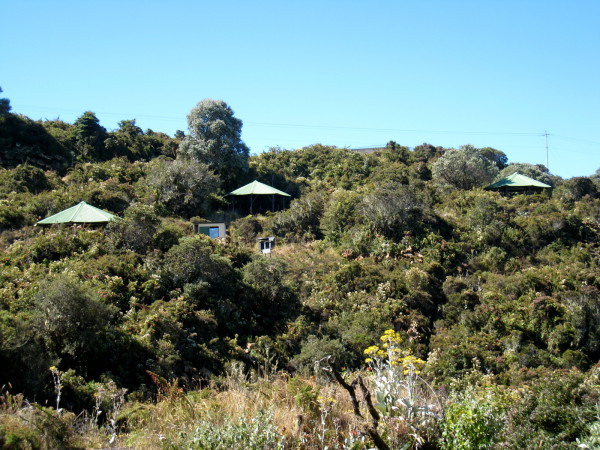 The picnic area at volcan Irazú has more hummingbirds than mosquitoes