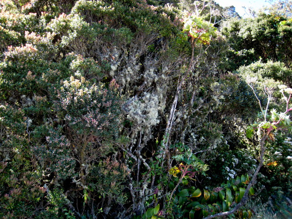 Shrubs and scrub forest around the rim