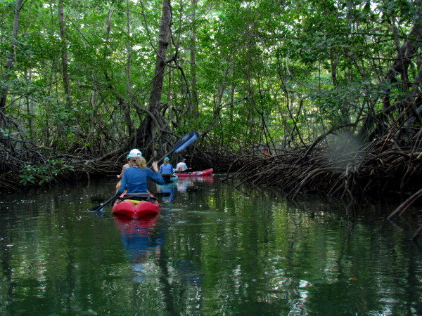 Kayaking in the Javillos estuary Nicoya Peninsula
