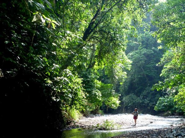 Walking up the Rio Tigre on the Osa Peninsula
