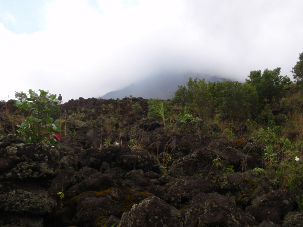 Regeneration on Lava flow