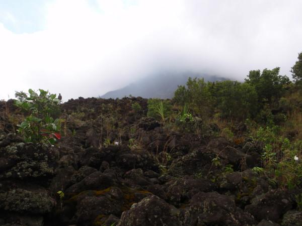 Regeneration on Lava flow