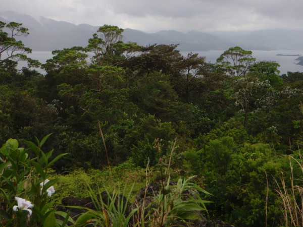 Lake Arenal from Sendero Coladas Arenal Volcano National Park