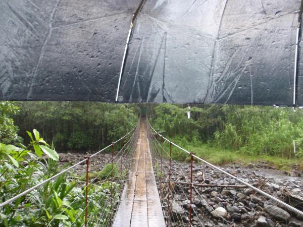 Sendero Tucanes rain