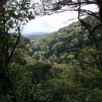 Although the easily accessible part of Tenorio is lower in elevation, overall it shares ecologies and most of the same inhabitants as Monteverde.