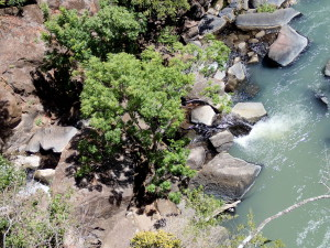 The Rio Aguacaliente flows south eight kilometers from La Fortuna de Bagaces to where it joins the Rio Blanca. From above you can see the small clear stream entering between the trees on the left side to mix with the milky waters of the White River. This is a different La Fortuna and different Rio Aguacaliente than the ones 70 km (as the crow flies, it's about 130 km on the road) to the east near Arenal Volcano.