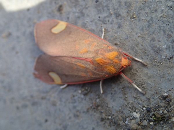 Moth hanging on tight