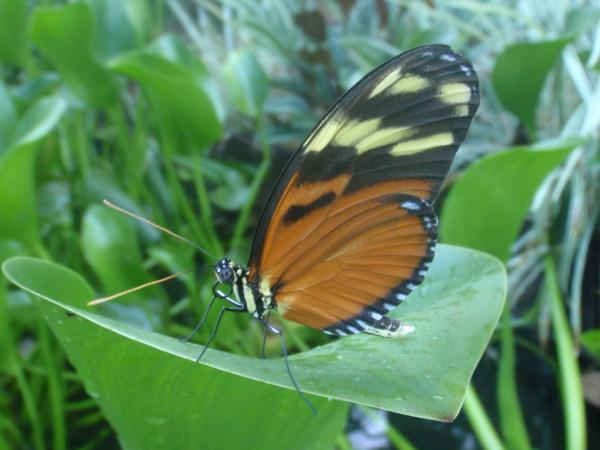 butterfly garden Hacienda Barú