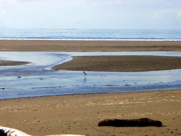 Lone egret on Playa Uvita