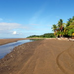 Playa Uvita - the tire tracks are from trailers. This is the official boat launch for Marino Ballena National Park